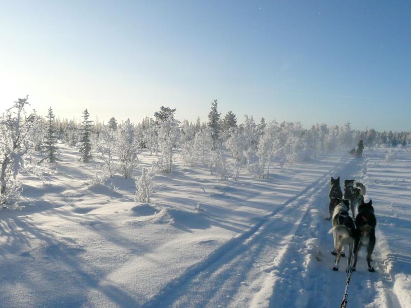 Wildnisreise mit einem Rudel Huskys in schwedische Gebirge